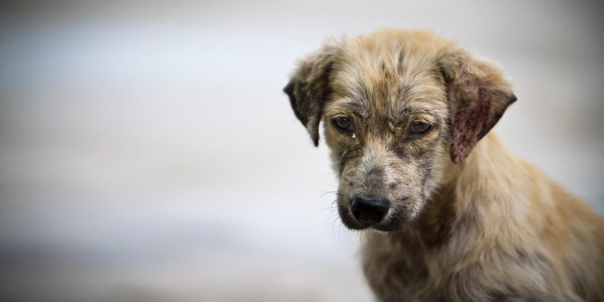 perro-abandonado